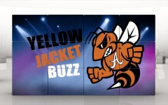 Yellow Jacket Buzz #8